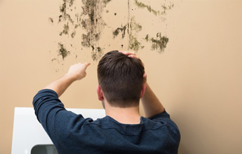 How to handle mould in a rental property